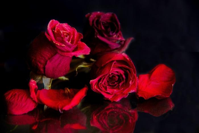 Roses5686